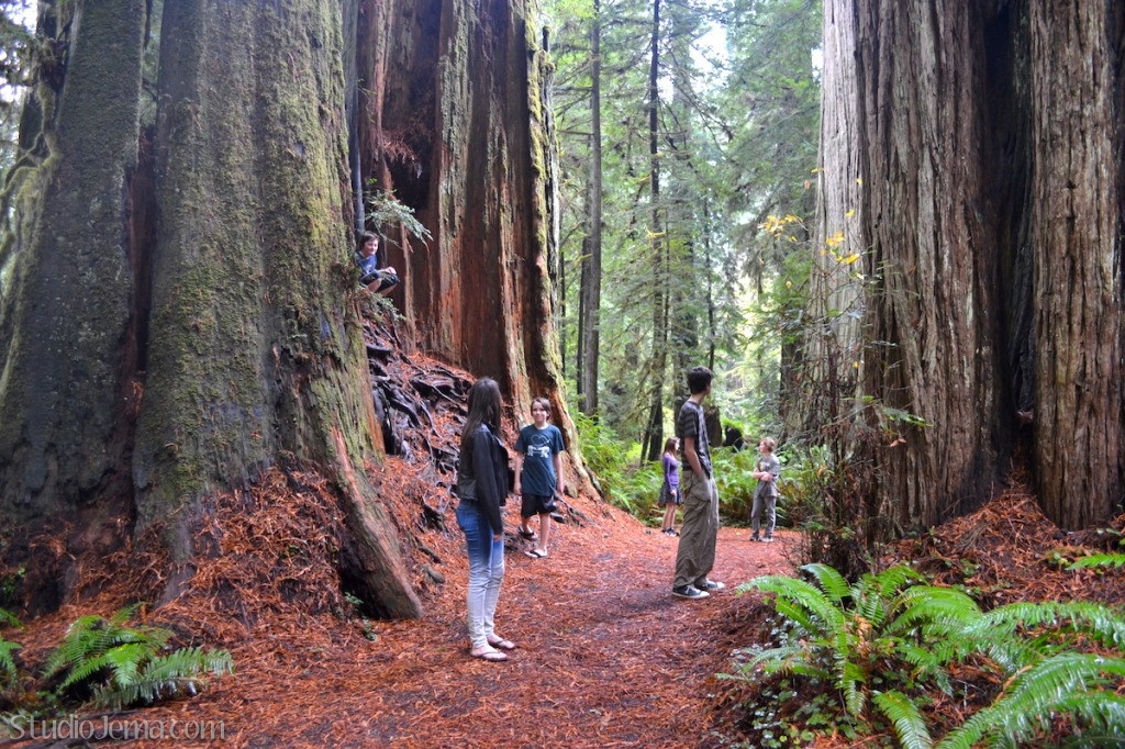 A group of kids walking in the Redwoods.