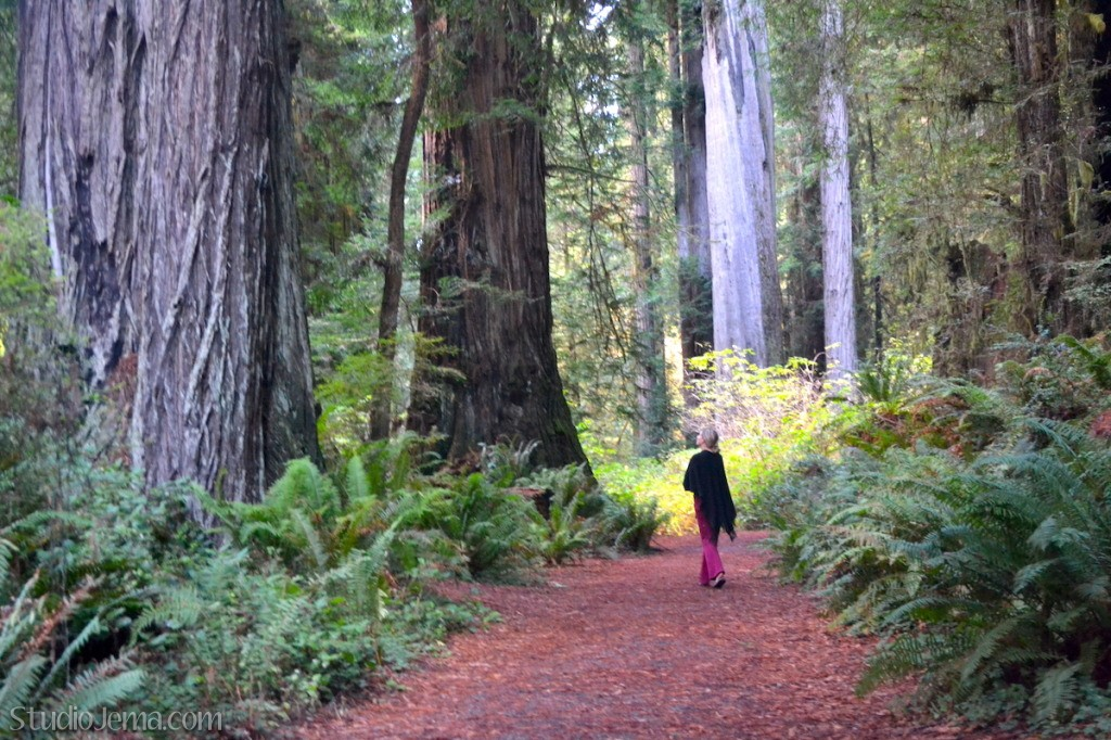 Path Through Redwoods Forest