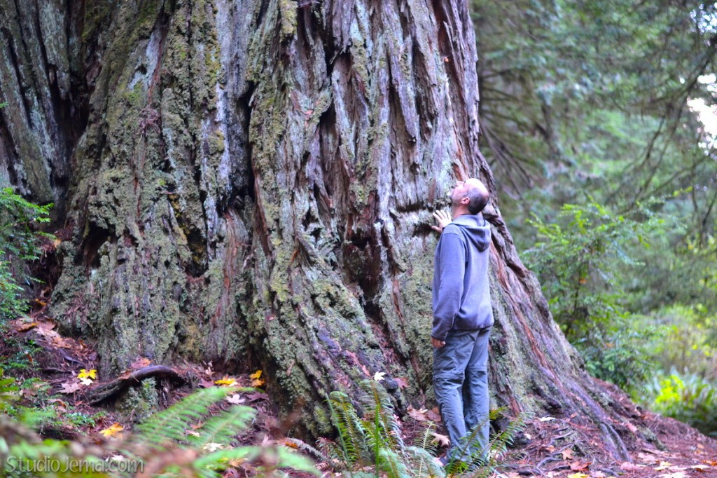 Redwood Tree Trunk