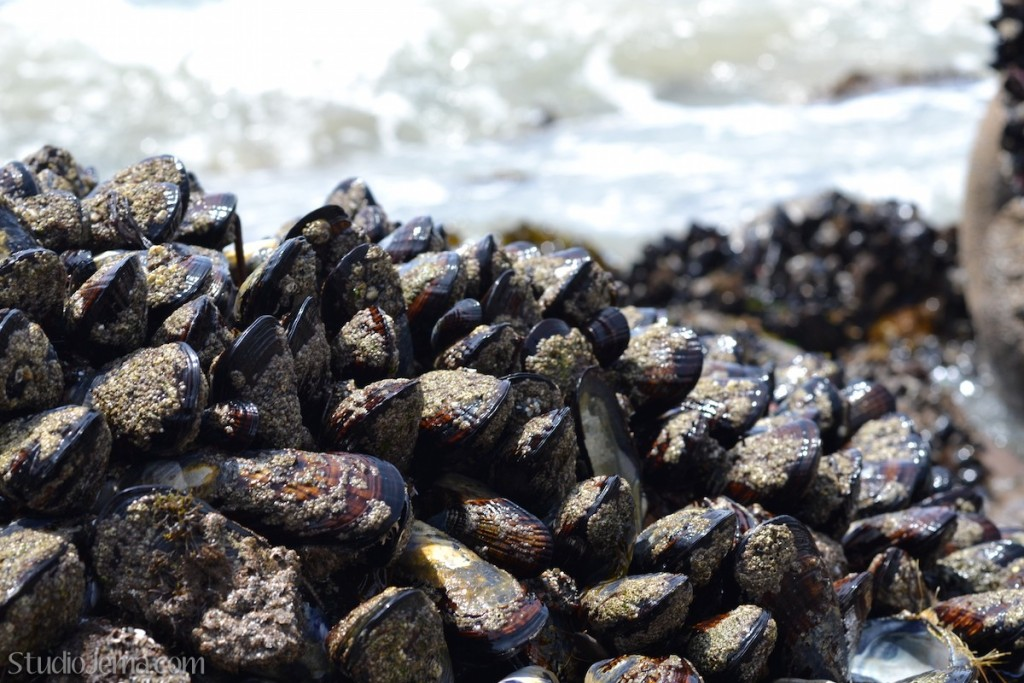 Mussels on a rock at Faria Beach Park.