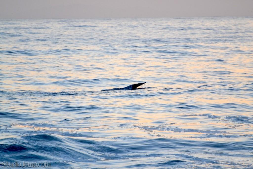 Whale tail at Faria Beach Park