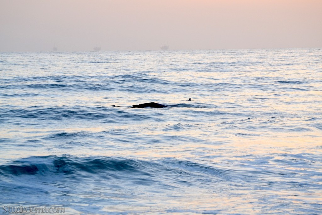 Whales and dolphins at Faria Beach Park