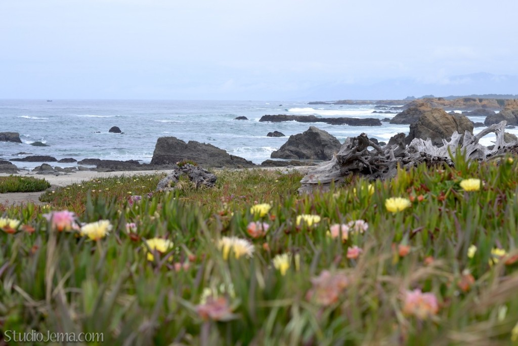 Wildflowers by ocean at Glass Beach